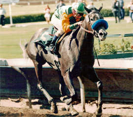 Smoky Cinder wins Canadian Derby. Aug. 30, 1997.